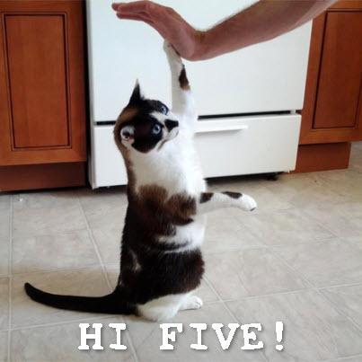 high_five_cat