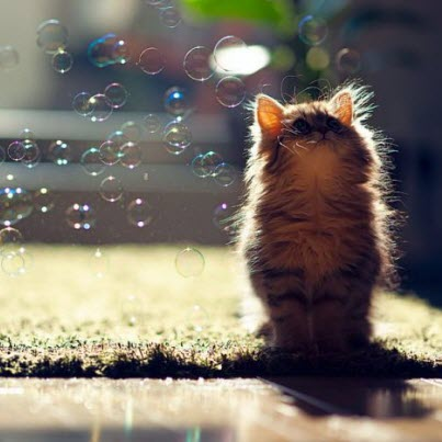 kitten and bubbles