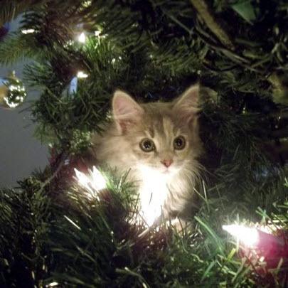 kitten as christmas tree decoration