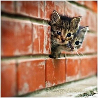 kitten brick
