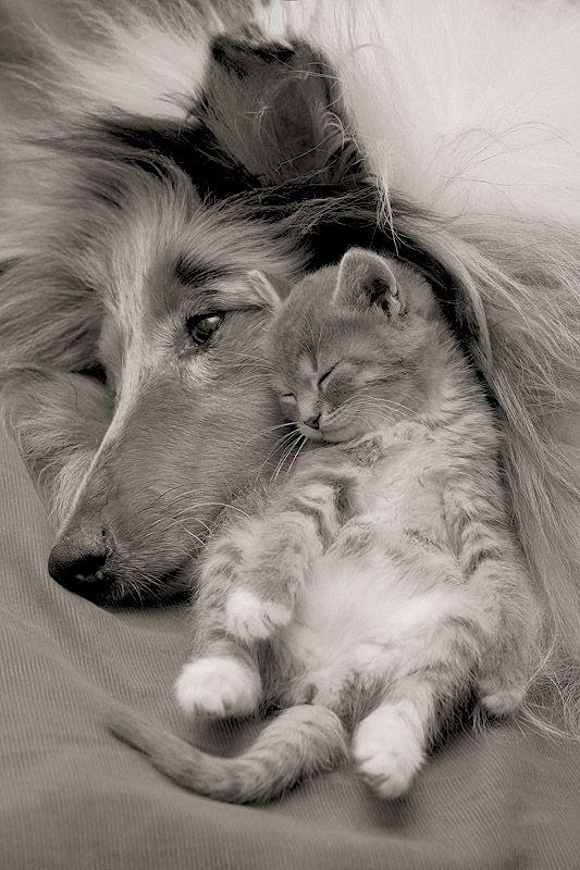 kitten-dog