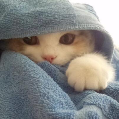 kitten hiding in towel