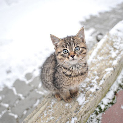 kitten in the cold