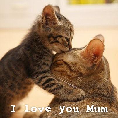 kitten kisses cat