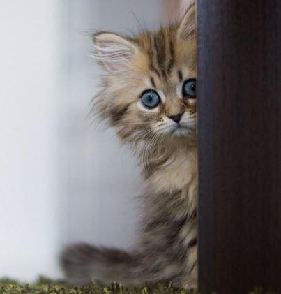 kitten looks round corner