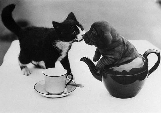 kitten puppy teacup