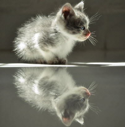 kitten reflection
