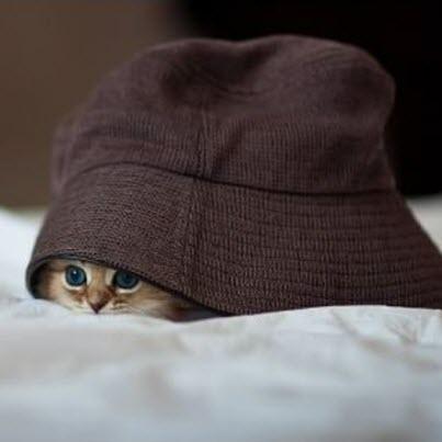 kitten under hat
