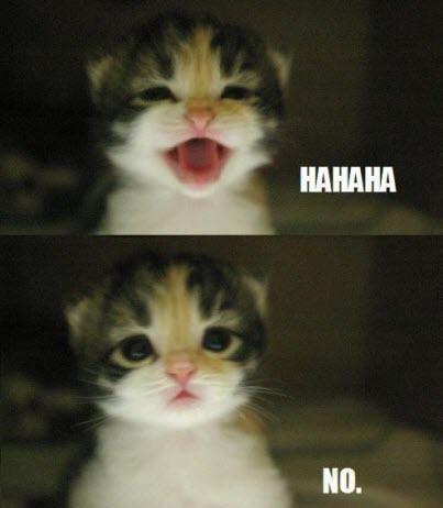 kitten yes no