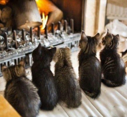 kittens fire
