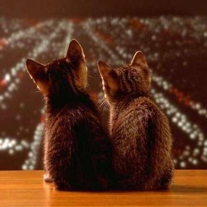 kittens los angeles at night