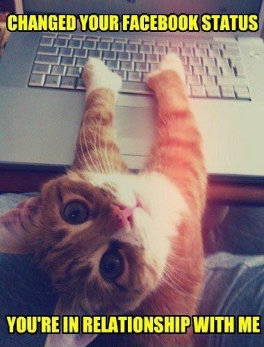 cat facebook status
