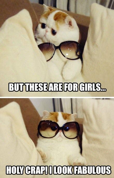 look fabulous cat
