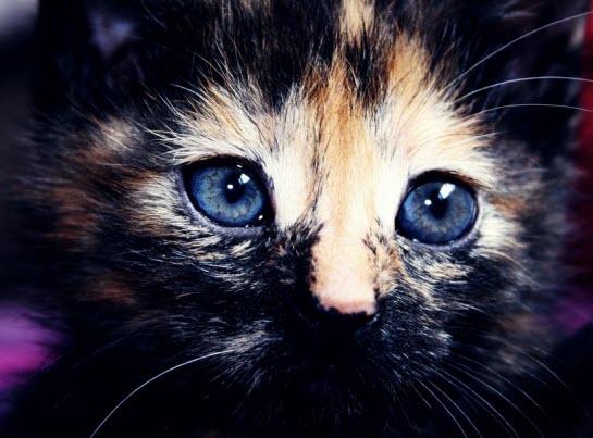 markings blue eyes