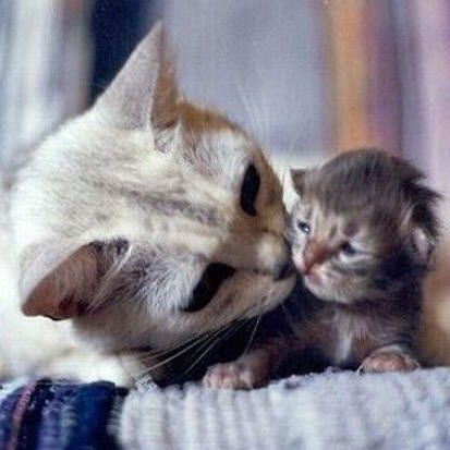 mum lick kitty