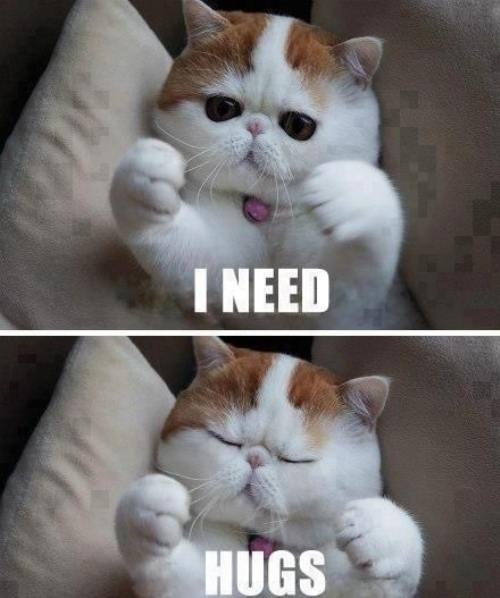 need hugs cat