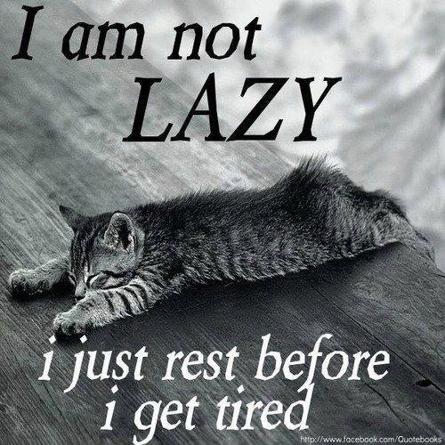 not lazy cat