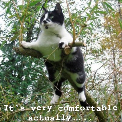 odd sit cat