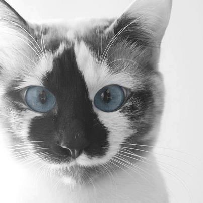 patch blue