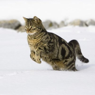 prancing in snow