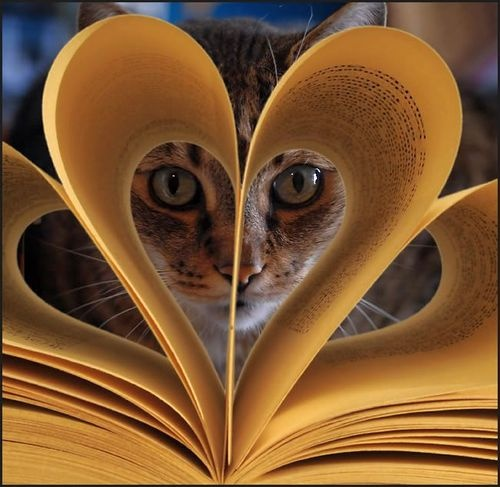 reading cat through book