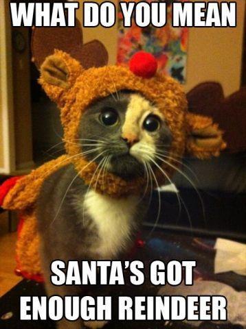 santa has enough reindeer