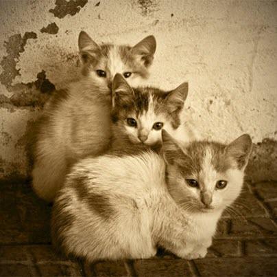 sepia kittens
