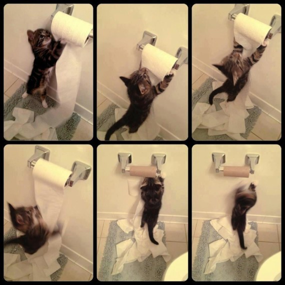 toilet roll kitten