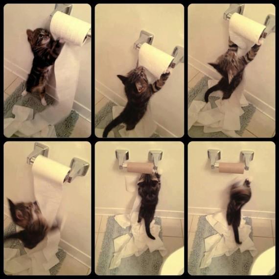 toilet roll kitten