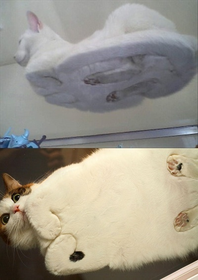 underside of cats
