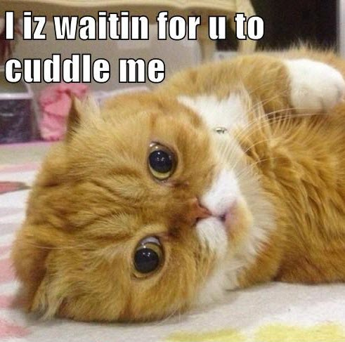 waiting for cuddle