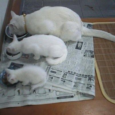 white cat family