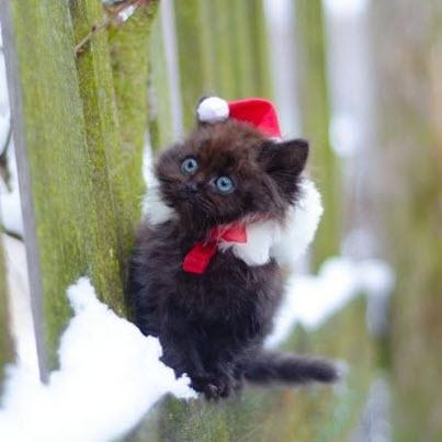 xmas kitten blac