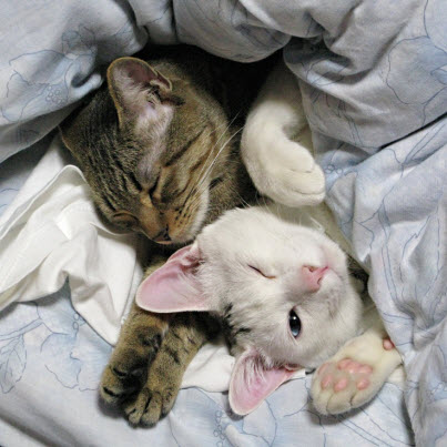 2 cats in bed