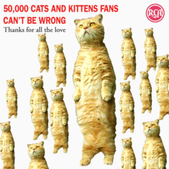 50000-cat-fans-600