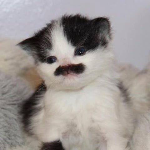 Groucho who