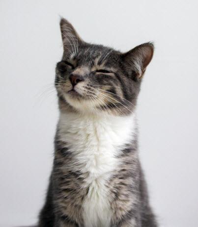 Inscrutable cat