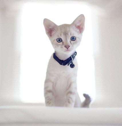 White cute kitten