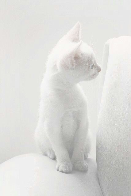 all white cat chair