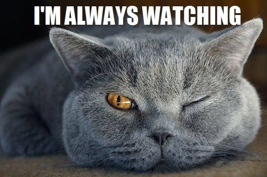 always watching cat