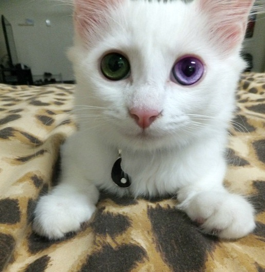 amazing eyes kitten