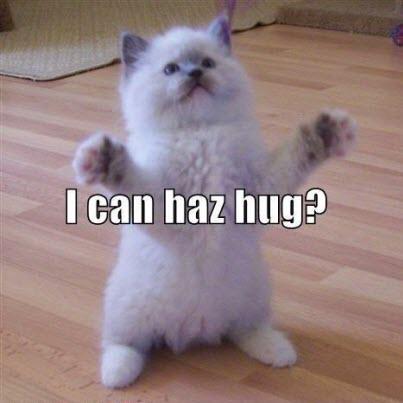 another hug cat