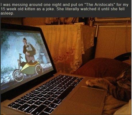 aristocats amazing