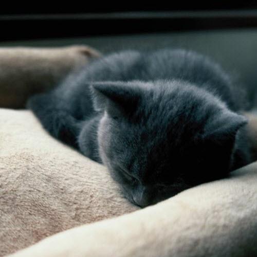 asleep grey