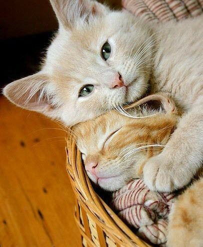 basket of kitty love