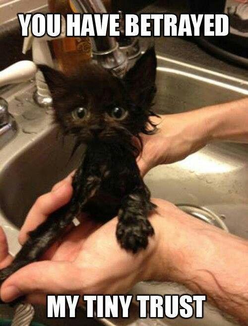 betrayed kitten