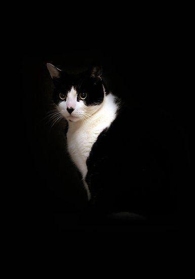 black and white portrait cat