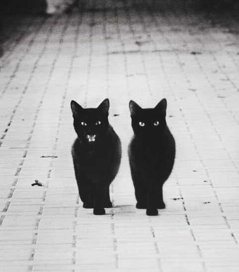 black cat patrol