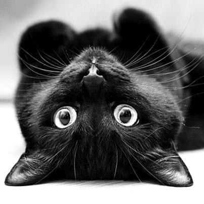 black cat upside down