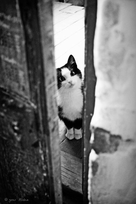 black white cat door